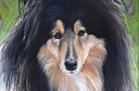 Schotse Collie Coco