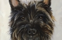 Cairn Terrier Boris
